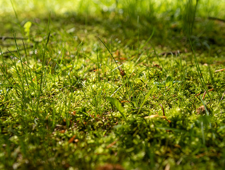 Photo: grass